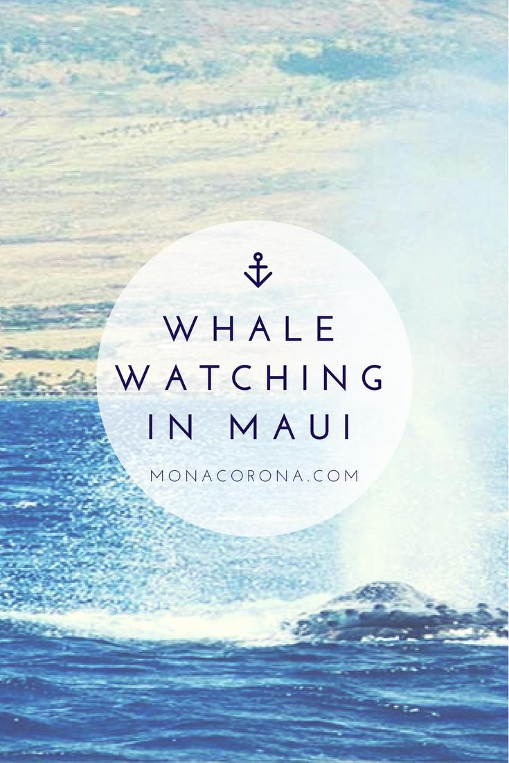 Whale Watching Maui Whale Season
