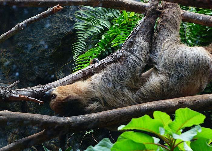 Manuel Antonio National Park Sloths