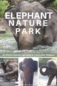 Click this pin to read all about the best elephant sanctuary in Chiang Mai, Thailand. Elephant Nature Park is one of the true few elephant rehabilitation centers in Thailand, and one the top things to do in Chiang Mai and the best things to do in Thailand.   MonaCorona.com   #Thailand #ChiangMai #Travel #Bucketlist #Thingstodo #itinerary #elephants #elephantsanctuary #tailandia #traveltips #tips #ethical