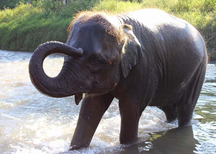 Elephant Nature Park Chaing Mai
