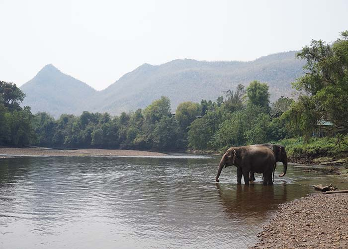 best elephant sanctuary in Chiang mai
