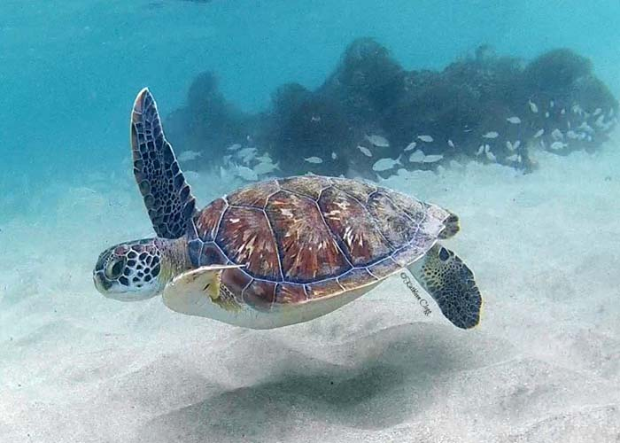 martinique snorkeling