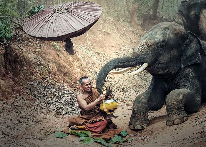 don't ride elephants.jpg