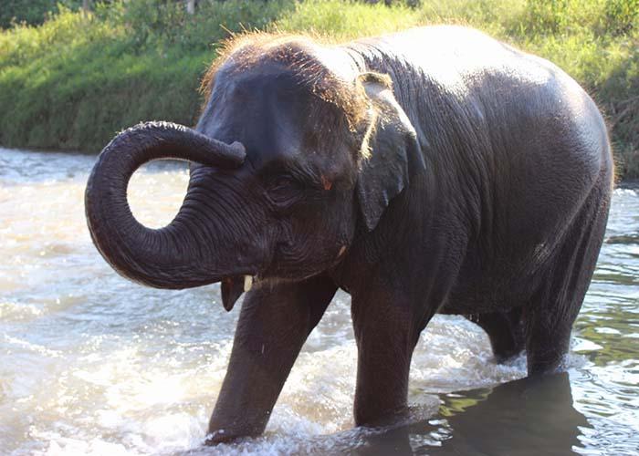 elephantnaturepark.jpg