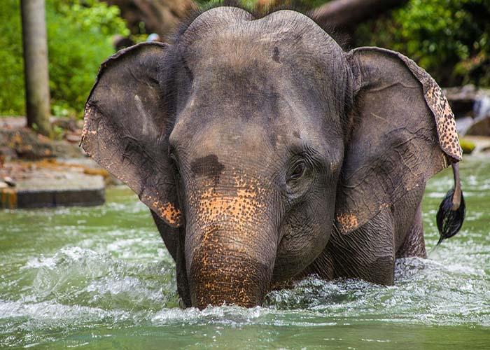 ethical elephant sanctuary.jpg
