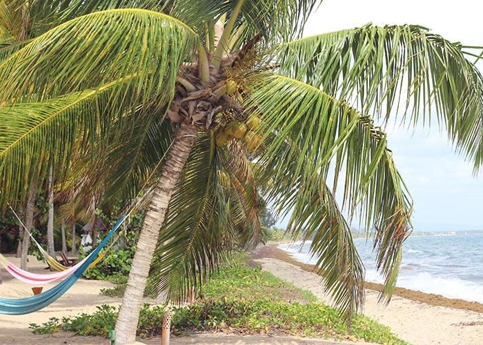 Hamanasi Hopkins Belize
