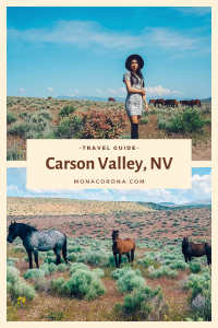 Looking for things to do in Carson Valley Nevada? Click here to read all about the top things to see in Carson Valley, Where to stay in Carson Valley, and Carson Valley Restaurants. If you love wild horses you definitely don't want to miss this!   #monacorona #carsonvalley #nevada #reno #travel #hotel #restaurants #horses #wildhorses